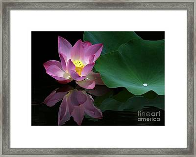 Pink Lotus Reflection Framed Print by Sabrina L Ryan