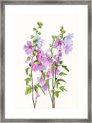 Pink Mallow Flowers Framed Print by Sharon Freeman
