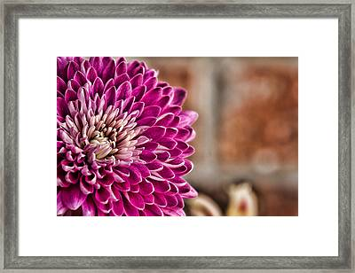 Pink Mum Framed Print by Lana Trussell