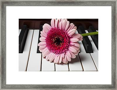 Pink Mum On Piano Keys Framed Print by Garry Gay