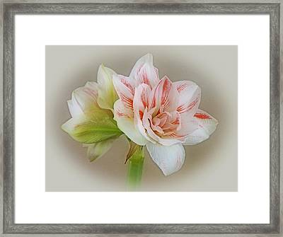 Pink Nymph Framed Print by Sandy Keeton