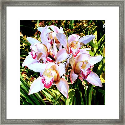 Pink Spirit Orchids Palm Springs Framed Print by William Dey