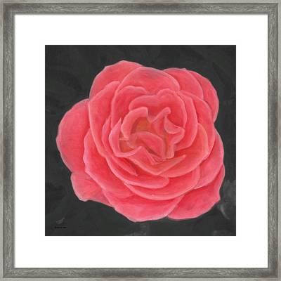Pink Pastel Rose Framed Print by Barbara St Jean