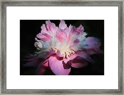 Pink Peony Framed Print by Donna Kennedy