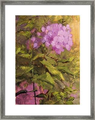 Pink Phlox Framed Print by Tracie Thompson