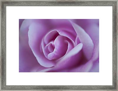 Pink Rose Framed Print by Phyllis Peterson