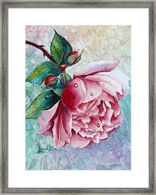 Pink Rose With Water Drops Framed Print by Karen Mattson