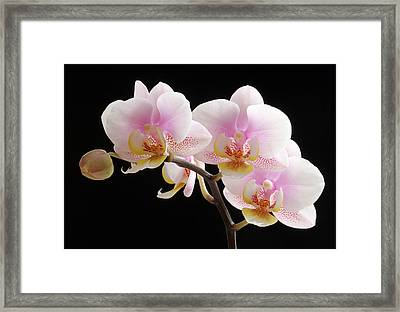 Pink Sensations Framed Print by Juergen Roth
