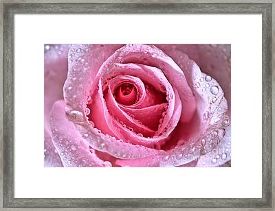 Pink Shimmering Rose Framed Print by Tracy  Hall