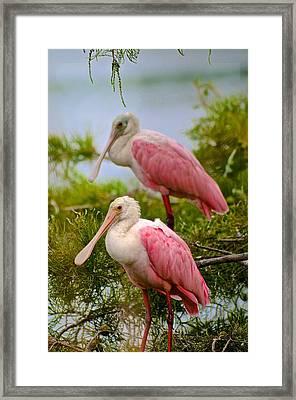 Pink Spoons Framed Print by Janal Koenig