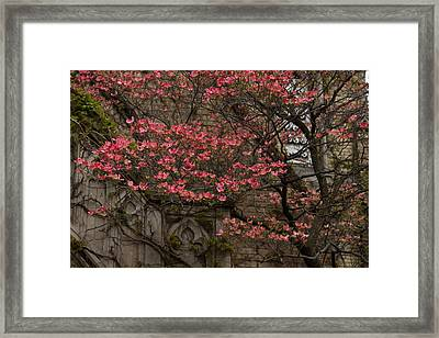 Pink Spring - Dogwood Filigree And Lace Framed Print by Georgia Mizuleva