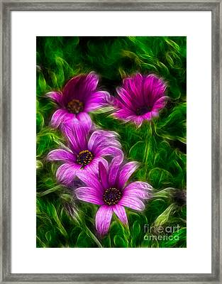Pink  Framed Print by Stelios Kleanthous