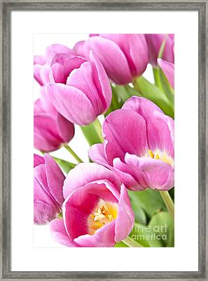 Cultivated Framed Print featuring the photograph Pink Tulips by Elena Elisseeva