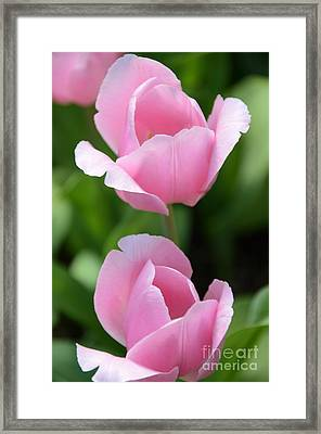 Pink Twins Framed Print by Kathleen Struckle