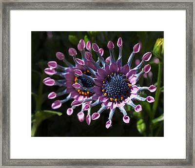 Pink Whirls Framed Print by Rona Black