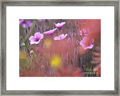 Pink Wild Geranium Framed Print by Heiko Koehrer-Wagner