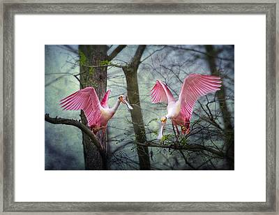 Pink Wings In The Swamp Framed Print by Bonnie Barry