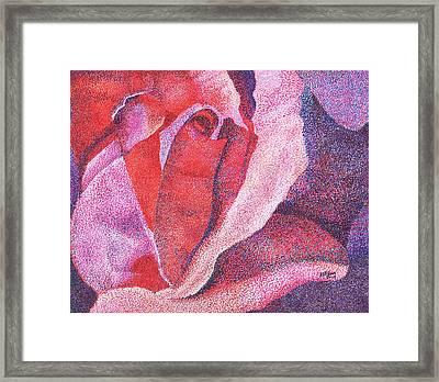 Pinkrose#5-2 Framed Print by William Killen