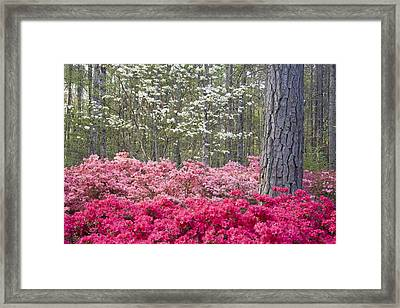 Pinks Framed Print by Eggers   Photography