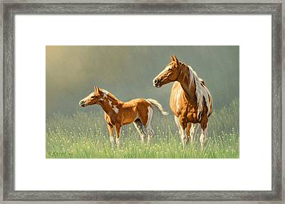Pinto Mare And Colt Framed Print by Paul Krapf