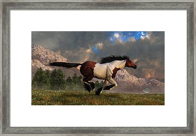 Pinto Mustang Galloping Framed Print by Daniel Eskridge
