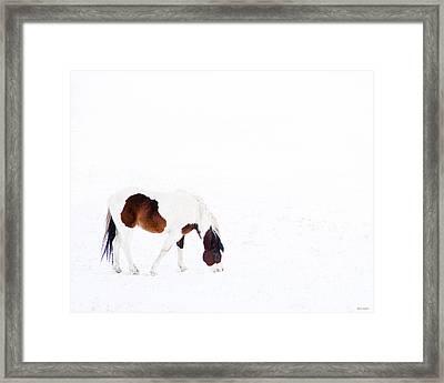 Pinto Pony Framed Print by Theresa Tahara
