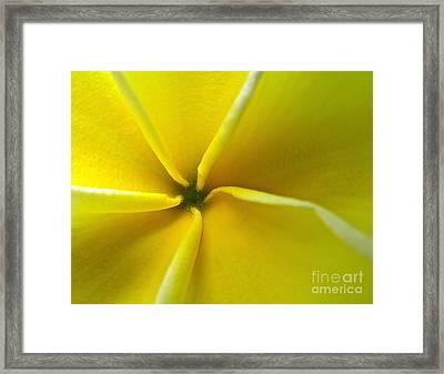 Pinwheel Plumeria Framed Print by Joy Hardee