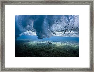 Turtle Turbulence Framed Print by Sean Davey