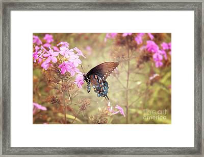 Pipevine Swallowtail Butterfly Framed Print by Lena Auxier