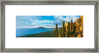 Pitaya Cactus Plants On Coast, Cabo Framed Print by Panoramic Images