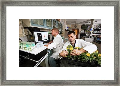 Plant Chlorophyll And Iron Research Framed Print by Stephen Ausmus/us Department Of Agriculture