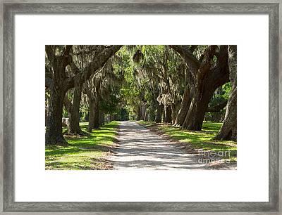 Plantation Road Framed Print by Louise Heusinkveld