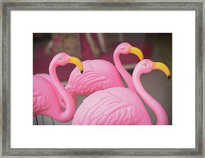 Plastic Pink Flamingos, Charleston Framed Print by Julien Mcroberts