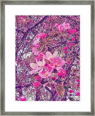 Plastic Wrapped Crabapple Blossom Framed Print by Minding My  Visions by Adri and Ray
