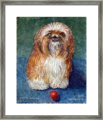 Play Ball With Me? Framed Print by David Tabor