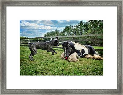 Play Ball With Me Framed Print by Fran J Scott