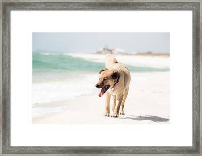 Play Buddy Framed Print by Shelby  Young