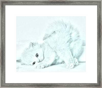 Playful Kitty Framed Print by J D Owen