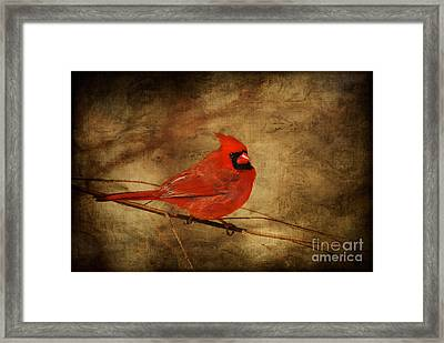 Please Feed The Birds Framed Print by Lois Bryan