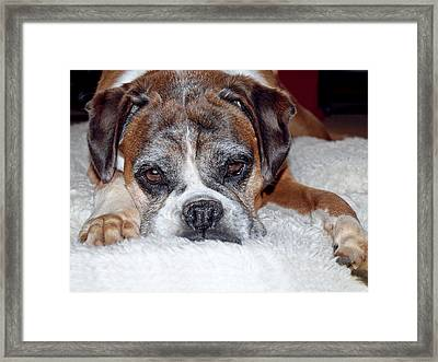 Please Let Me Stay By The Fire Framed Print by Gill Billington