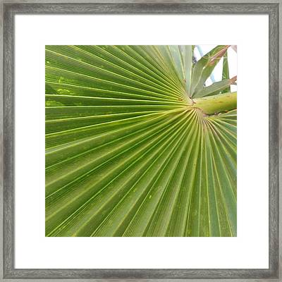 Pleated In Greenish  Framed Print by ARTography by Pamela Smale Williams