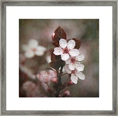 Plum Blossoms Framed Print by Angie Vogel
