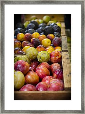 Plum Gorgeous Framed Print by Caitlyn  Grasso
