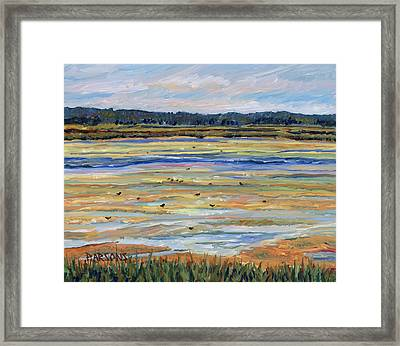 Plum Island Salt Marsh Framed Print by Pamela Parsons