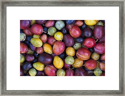Plum Pattern Framed Print by Tim Gainey