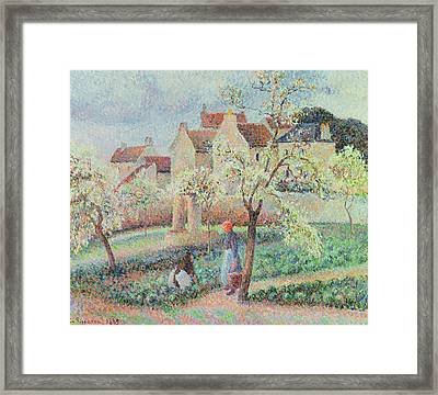 Plum Trees In Flower Framed Print by Camille Pissarro