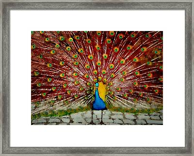 Plumage Framed Print by Diana Angstadt