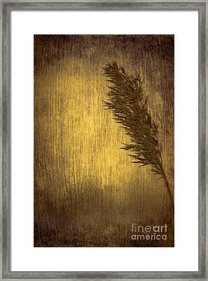 Plume Framed Print by Jan Bickerton