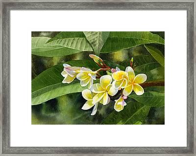 Plumeria Blossoms Framed Print by Sharon Freeman