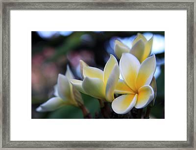 Plumeria Frangipani Sunshine Lei Framed Print by Karon Melillo DeVega